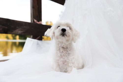 Hochzeitsfotos 9